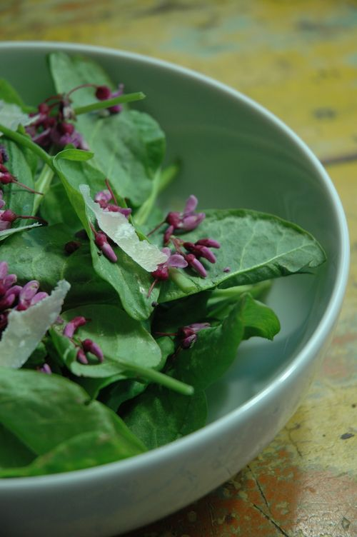 Yellow Tree Farm - Sorrel Salad With Red Buds2